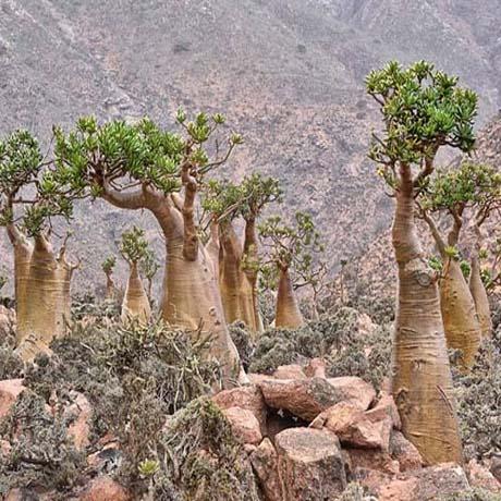 Paisaje de Socotra