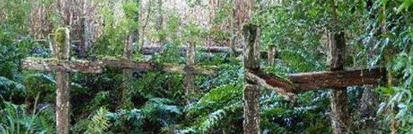 isla-de-los-muertos-en-aysen_destacado